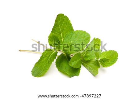 stock-photo-mentha-piperita-peppermint-on-white-background-47897227.jpg