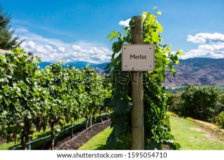 Merlot wine grape variety sign on wooden vertical end post, Canadian vineyard varieties signs, Okanagan valley wine region British Columbia BC, Canada
