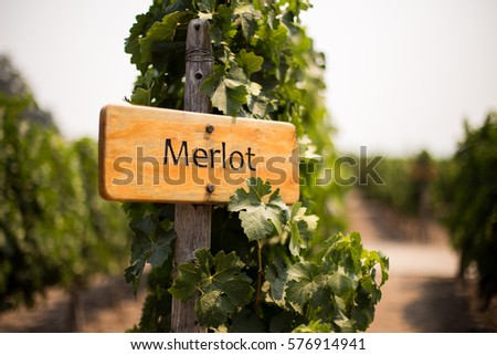 Merlot wine sign  Foto d'archivio ©