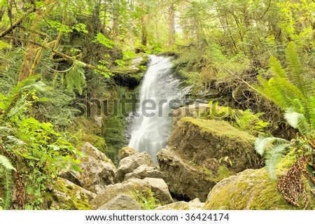 Merriman Falls, Quinault Rainforest, Olympic National Park in Washington state, U.S.A.