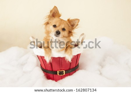 Merry Christmas from Chihuahua