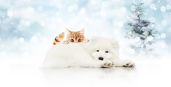 merry christmas signboard or gift card for pet shop, white dog and ginger cat pets isolated on blurred xmas lights and tree, copy space blank background