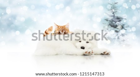 merry christmas signboard or gift card for pet shop, white dog and ginger cat pets isolated on blurred xmas lights and tree, copy space blank background #1215147313