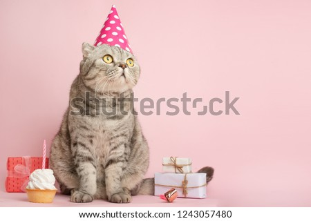 Merry Kitty Birthday Banner Anniversary Or Holiday