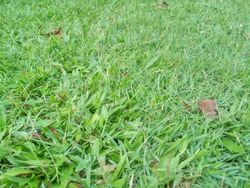 messy green grass and some of withered fallen leaves