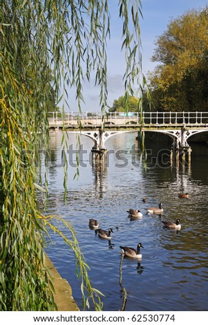 Metal Footbridge over the River Thames in Maidenhead, England with Ducks and Geese in the water