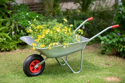 Metal garden cart filled with tree branches.