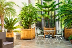 Metal garden furniture, stools and table standing in tropical plants orangery with palms in wooden flowerbeds. Relaxing time in biophilic interior style. Greenhouse cafe concept. Copy space.