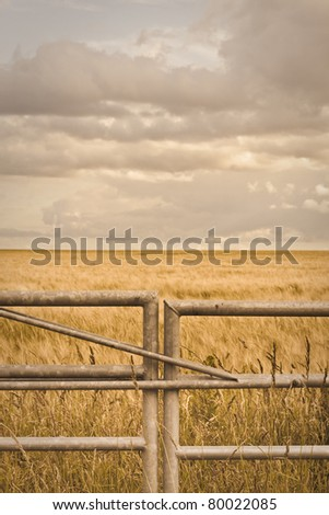 Metal gate in front of a field of barley in Suffolk, UK