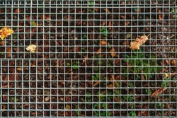 Metal lattice for water runoff. Autumn leaves at street lattice. Abstract backround with fallen leaves. Street water drain covered with yellow leaves. Autumn season with fallen yellow leaves.