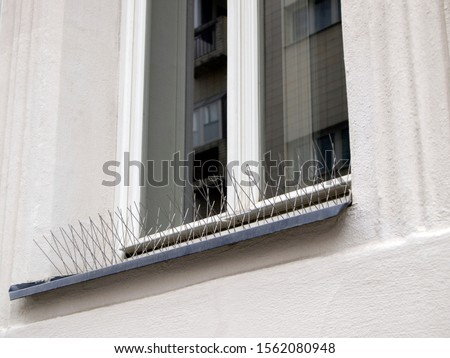 Photo of  Metal (steel) bird spikes on the windowsill. Reliable protection against birds, especially pigeons. Anti bird wire.