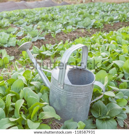 metal watering can in the field