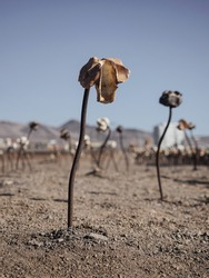 Metal white brown rose flower plant art installation at Huanchaca Ruins Museum in Antofagasta north Chile