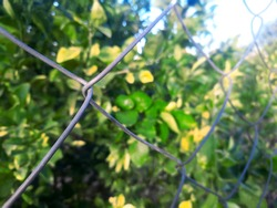 metal wire fencing on field boundary selective focus with blurred background