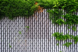 Metal wired fence with metal plate installed. Plants growing over / through the metal fence.