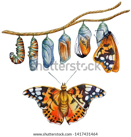 Metamorphosis of the caterpillar. Watercolor illustration. The caterpillar turns into a butterfly.