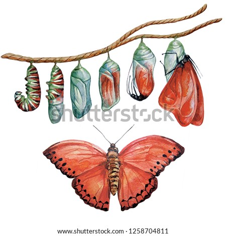 Metamorphosis of the caterpillar. Watercolor illustration. The caterpillar turns into a red butterfly.