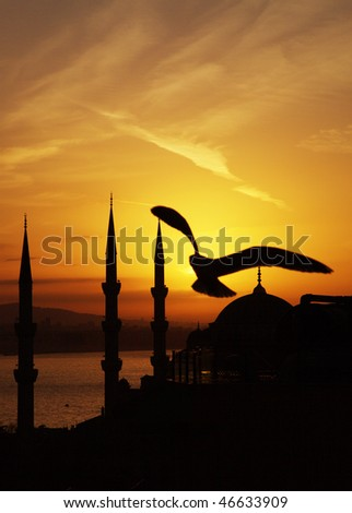 Mew above Mosque Sultanahmet by sunrise