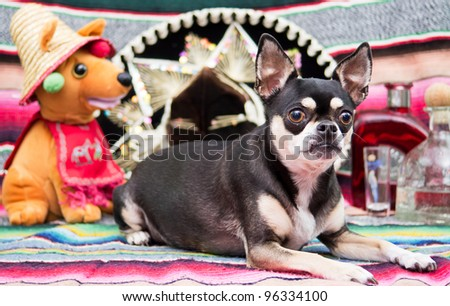 Mexican Chihuahua Celebrating Cinco De Mayo