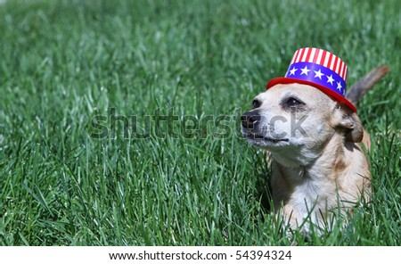Mexican Chihuahua wearing patriotic hat