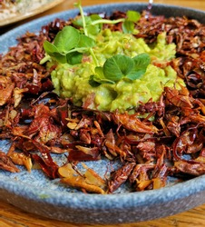 Mexican grasshopper plate garnished with guacamole and cilantro