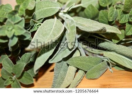 Mexican Oregano, Greek Oregano and Sage on Wood Board #1205676664