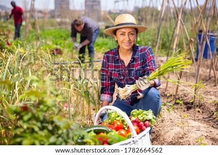 Mexican woman horticulturist picking harvest of garlic  in  garden