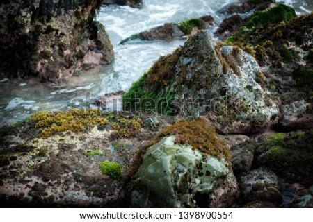 Mexico green crab on seashore rock #1398900554