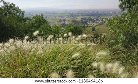 Mexico Landscape, silvester grass on the hills.
