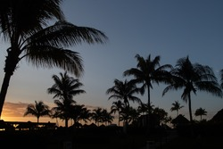 Mexico palms silhuette during sunrise