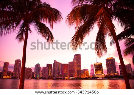 Miami Florida skyline and bay at sunset through two palm trees.