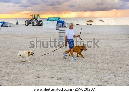 MIAMI, USA - AUG 7, 2013: man in late afternoon walks along south beach with his dogs in Miami, USA. People have to walk with dog lead on public beaches.