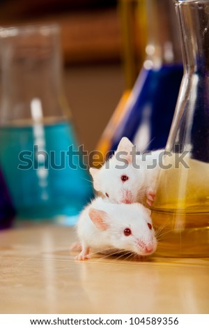 Mice on a lab table surrounded by chemical glassware