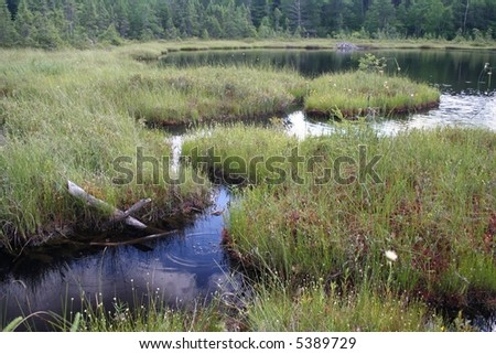 Michigan bog with beaver home