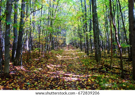 Michigan woods in the Fall #672839206