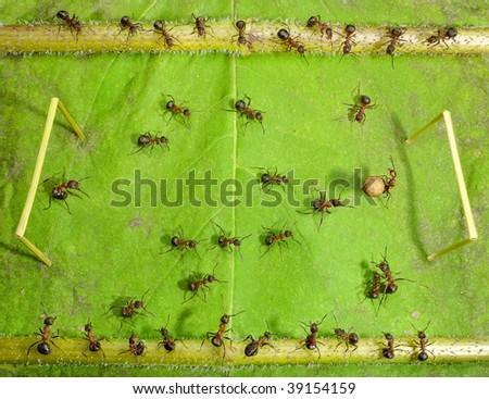 micro football, ants play soccer - stock photo