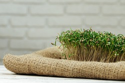 Micro green close up. Healthy food concept