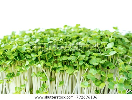Micro greens arugula sprouts on a white background