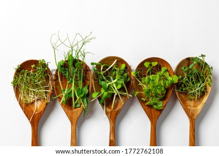 Micro greens in wooden spoon on white background Foto stock ©