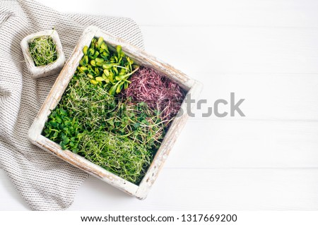 Micro greens sprouts of radish, amaranth, mustard, beetroot and onion in wooden box on white wooden background with blank space for text. Top view, flat lay.
