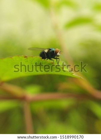 micro photography ...micro image of a fly a leaf  closeup of nature view green leaf on blurred greenery background.