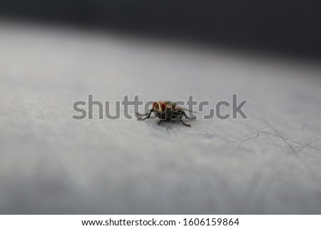 micro shoot of fly high quality with high details