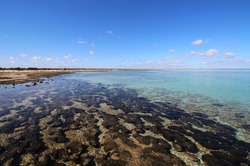 Microbial mats and stromatolites are an important part of Shark Bay's World Heritage status