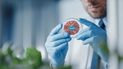 Microbiologist Holding Lab-Grown Cultured Vegan Meat Sample. Medical Scientist Working on Plant-Based Beef Substitute for Vegetarians in a Modern Food Science Laboratory.