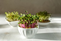 Microgreen kress, pink radish sprouts on white wooden background in trendy hard direct sunlight, deep shadows, copy space - vegan, vegetarian, healthy eating concept