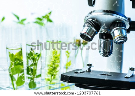 microscope and young plant in science test tube , lab research biochemistry , biotechnology concept.