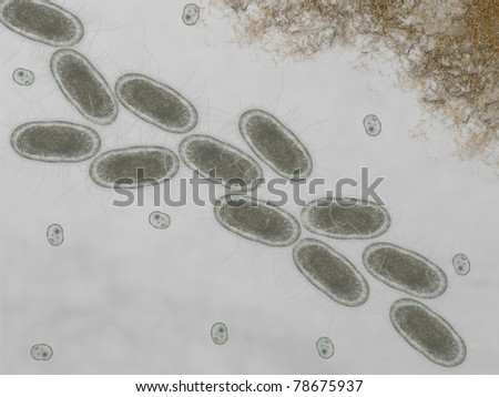 Microscopic of ecoli bacteria, Escherichia coli bacteria, Listeria monocytogenes