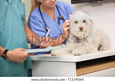 Mid section of veterinarian and assistant examining dog - stock photo