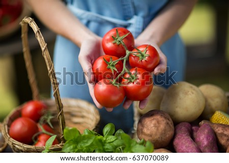 Mid section of woman holding tomatoes on palm - Shutterstock ID 637070089