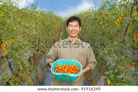 middle aged happy  asian farmer holding tomato on his farm